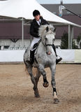 Beautiful girl and gray horse in sports arena Royalty Free Stock Images