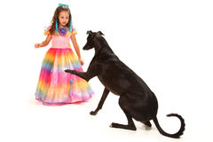 Beautiful Girl and Greyhound Stock Photo