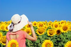 Beautiful girl in a hat among a sunflower stock photos