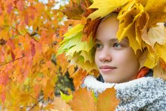 Beautiful girl hid in maple leaves on the background of autumn royalty free stock images