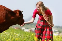 Beautiful girl with long hair feeding cow Royalty Free Stock Photography