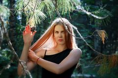 Beautiful girl with long hair poses with a cedar cone in the Siberian taiga royalty free stock photos
