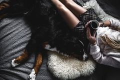 Beautiful girl lying and her cute dog Bernese Mountain Dog on bed, Stylish, fashionable, cozy. A Royalty Free Stock Photography