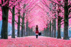 Beautiful Girl with Pink Leaves in Nami Island, Korea. stock photos