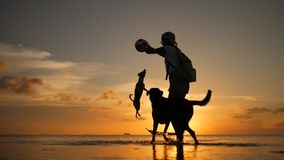 Beautiful girl playing with jack russell dog with a ball at beach during amazing sunset. Koh Phangan, Thailand. HD stock footage