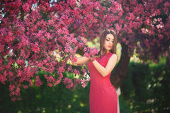 Beautiful girl posing to the photographer against the background of blooming pink trees. Spring. Sakura. Stock Images