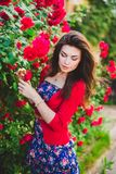 Beautiful girl and red roses Royalty Free Stock Photography