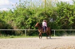 Beautiful girl riding a  purebred horse Stock Photos