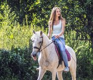A beautiful girl is riding a white horse. stock photography