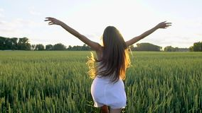 Beautiful girl running raising hands on wheat field in sunset. Freedom, health, happiness concept. Happy beauty young. Woman with long hair in field enjoying stock video footage