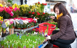Beautiful girl selecting flowers Royalty Free Stock Image