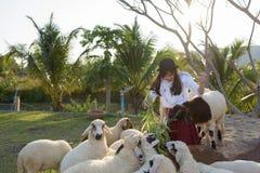 Beautiful girl on sheep farm Stock Photography