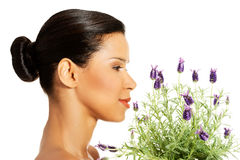 Beautiful girl smell lavender flowers Stock Photos