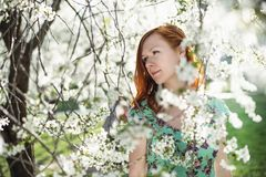 Beautiful girl in spring blossom Stock Image