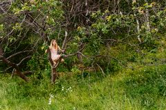 Beautiful girl in summer dress sitting on tree in summer stock images