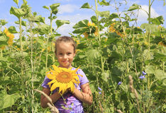 Beautiful girl in sunflowers. Royalty Free Stock Photo