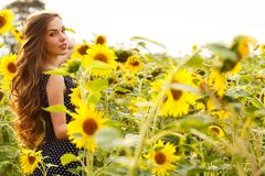 Beautiful girl with sunflowers Royalty Free Stock Photos