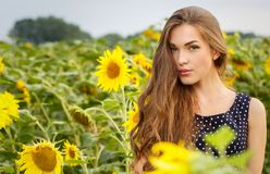 Beautiful girl with sunflowers Royalty Free Stock Images