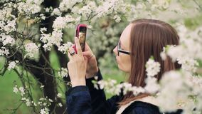 Beautiful girl takes photos of blossom spring tree flowers on a smart phone. Closeup shot stock video footage