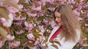 Beautiful girl takes photos of cherry blossom sakura tree spring pink flowers on a smartphone.  stock footage