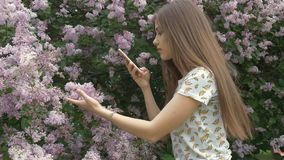 A beautiful girl is taking pictures of a lilac bush. Enjoys beautiful flowers. stock video footage