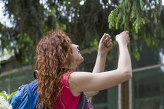 Beautiful girl touching the green young needles on the branch of spruce Royalty Free Stock Photography