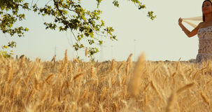 A beautiful girl with a veil in wheat field walking. A woman strolling with a transparent veil at sunset in the middle of nature and leaves on tree with the wind stock video footage