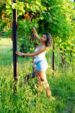 A beautiful girl in a vineyard. A beautiful girl with curly golden hair, wearing a white singlet and a pair of blue denim shorts, in a green vineyard during a royalty free stock image