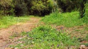 Beautiful girl walking on the path 2 stock video