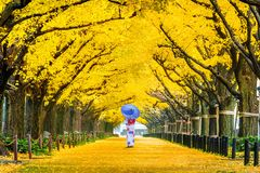Beautiful girl wearing japanese traditional kimono at row of yellow ginkgo tree in autumn. Autumn park in Tokyo, Japan stock photography