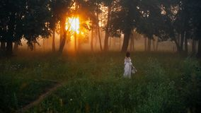 Beautiful girl in a white dress in the sunny summer forest. stock video footage