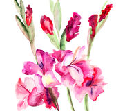 Beautiful Gladiole  flowers Royalty Free Stock Photo