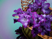 Beautiful gladiolus are in a wicker basket. Beautiful dark blue gladiolus are in a wicker basket Royalty Free Stock Images