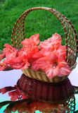 Beautiful gladiolus are in a wicker basket. Beautiful gladiolus and a wicker basket reflected in a mirror Royalty Free Stock Photo