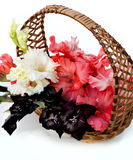 Beautiful gladiolus are in a wicker basket. On a white background Stock Photo