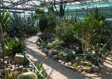 Beautiful glass greenhouse with tropical African plants. Royalty Free Stock Photos