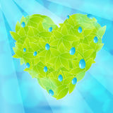 Beautiful, glittering heart from leaves. Vector illustration of ecology concept - beautiful, glittering heart from leaves with water drops Royalty Free Stock Photos