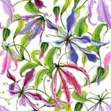 Beautiful gloriosa lily flowers with climbing leaves on white background. Seamless floral pattern. Watercolor painting. Hand painted botanical illustration Stock Photography