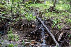 Small Waterfall Creates a Creek Through Lush Grass in Rocky Mountain National Park stock photo