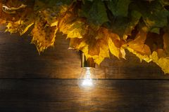 Glowing light bulbs on autumn wooden background. stock photos