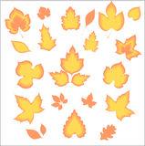 Beautiful  gold leaves Stock Photography