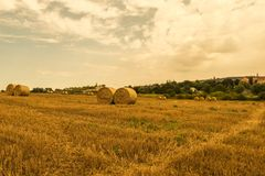 Beautiful, gold, polish field view with large round bales of straw hay. stock photos