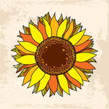 Beautiful gold sunflower for your design Stock Photography