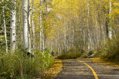 Beautiful Golden Aspen Tree Lined Path Near Vail C stock photo