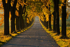 Beautiful golden autumn alley. With warm light Royalty Free Stock Images