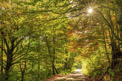 Beautiful golden autumn landscape Stock Photography