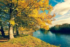 Beautiful Autumn in the Park, Scotland. Beautiful, golden autumn scenery with trees and golden leaves in the sunshine in Scotland royalty free stock image