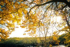 Beautiful, golden autumn scenery with trees and golden leaves in the sunshine. In Scotland royalty free stock photo