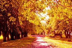 Beautiful, golden autumn scenery with trees and golden leaves in the sunshine in Scotland. UK royalty free stock photography
