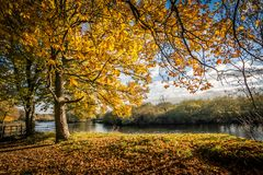 Beautiful, golden autumn scenery with trees and golden leaves and the river. Beautiful, golden autumn scenery with trees and golden leaves in the sunshine in stock photography